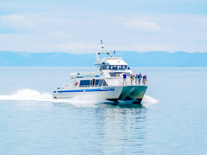 The Condor Express Whale Watching Boat